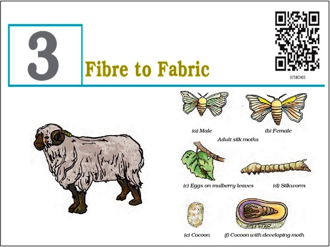 NCERT Solutions for Class 7 Science: Chapter 3 - Fibre to Fabric