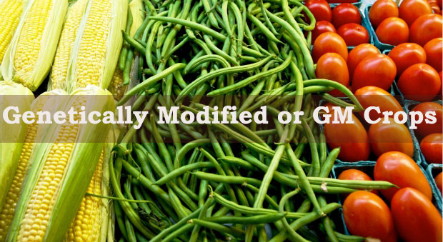 what are the advantages and disadvantages of genetically
