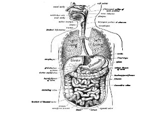 GK Questions & Answers on Science: Biology- Human Digestive ...