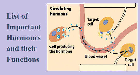 List Of Hormones In Human Body And Their Functions