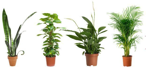 Top 5 indoor Plants that help in combating air pollution Names Of Indoor Houseplants Safe on best houseplants, names of indoor cactus, tropical houseplants, low light houseplants, 10 easy houseplants, names of vegetables, names of plants, names of indoor begonias, names of flowers, most common houseplants, names of shrubs, names of indoor trees, names of vines, names of indoor palms, names of books,