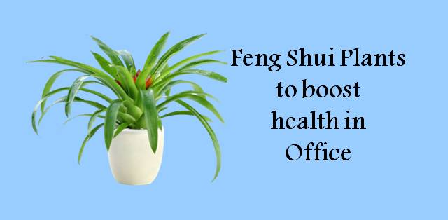 Feng Shui Plants to purify air and boost your office health