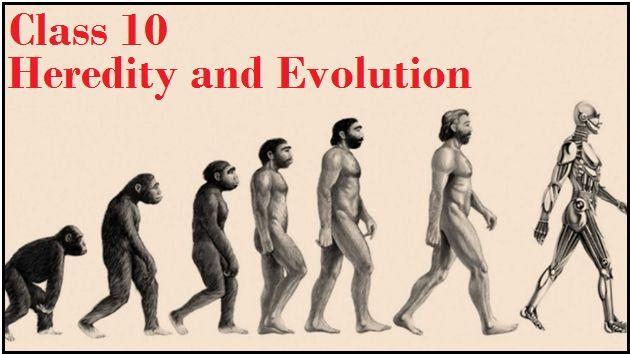 Heredity and Evolution: NCERT Solutions