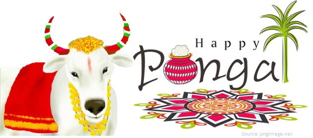 Why Pongal Festival is celebrated? HN